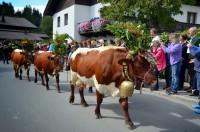 Almabtrieb im Pinzgau