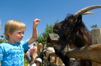 Almdorf der Tiere im Salzburger Land