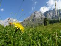 Blumenwiese Hochkönig im Salzburger Land